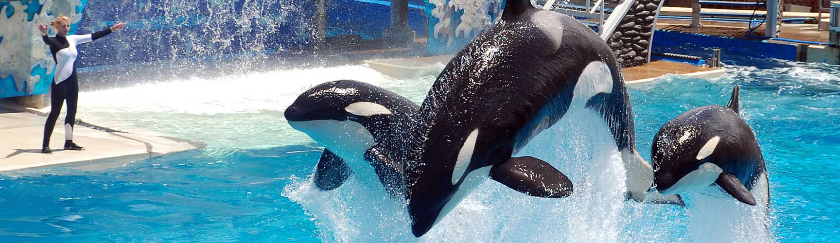 Save on SeaWorld Adventure Park.